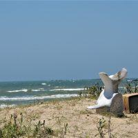 Cabo Polonio: Un lugar de otro mundo